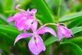 Картинка листья, макро, природа, растение, лепестки, орхидея