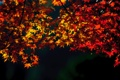 Картинка листья, время года, природа, желтые, красные, осень