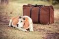 Картинка чёрные очки, сумка, пёс
