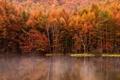 Картинка осень, лес, деревья, туман, озеро, отражение