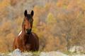 Картинка природа, осень, конь
