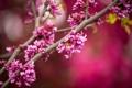 Картинка цветы, ветки, дерево, розовые, цветение