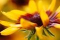 Картинка цветок, макро, желтый, лепесток