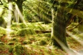 Картинка лес, лучи, деревья, блики, листва, мох, солце
