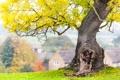 Картинка осень, трава, листья, дерево, ветви, деревня, боке