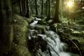 Картинка лес, деревья, ручей