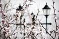 Картинка весна, ветки, цветение, сакура, фонари, природа, цветы