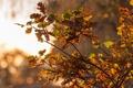 Картинка осень, листья, капли, дождь, дерево, желтые, дуб