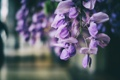Картинка сиреневые, лепестки, цветы