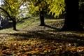 Картинка осень, природа, blur, опавшие листья