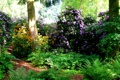 Картинка трава, зелень, Park Seleger Moor, кусты, деревья, рододендрон, парк