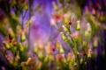 Картинка макро, цветы, роса, растения