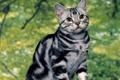 Картинка кошка, лето, полосатик