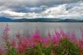 Картинка небо, цветы, горы, тучи, озеро
