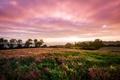 Картинка поле, трава, облака, закат, цветы, природа, Англия