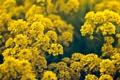Картинка лето, макро, цветы, цветки, flowers, macro, тебли