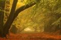 Картинка осень, пейзаж, парк