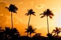 Картинка закат, желтый, пуэрто рико, оранжевый, вечер, sunset, palms