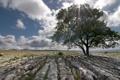 Картинка камни, поле, пейзаж, дерево