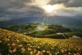 Картинка поле, солнце, пейзаж, цветы, природа, холм
