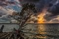 Картинка закат, пейзаж, небо, дерево. ветки, море
