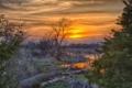 Картинка закат, весна, зелень, вода, деревья, молодая, бревно