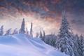 Картинка зима, лес, облака, рассвет, сугробы, ёлки