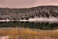 Картинка лес, пейзаж, река