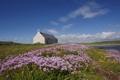 Картинка поле, небо, облака, цветы, река, церковь