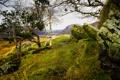 Картинка деревья, горы, камни, скалы, трава.