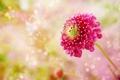 Картинка цветок, стебель, боке