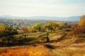 Картинка осень, деревья, природа, город, Арсеньев