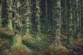 Картинка forest, trees, woods, wilderness, scotland