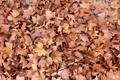 Картинка осень, листья, клен