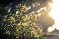 Картинка листья, солнце, зеленые
