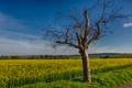 Картинка поле, трава, Дерево