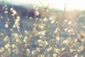 Картинка трава, солнце, цветы, солнечно, мелкие