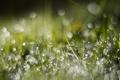 Картинка трава, макро, роса, утро, боке