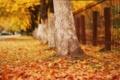 Картинка город, осень, улица