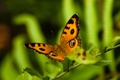 Картинка глаза, рисунок, крылья, ветка, смотрят, бабочька