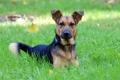 Картинка преданность, трава, весна, друг, зелёное, собака