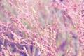 Картинка макро, нежность, розовое