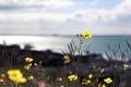 Картинка макро, цветы, природа, растения, лепестки, стебельки