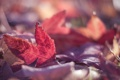 Картинка осень, макро, краски, листва, красные