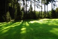 Картинка зелень, трава, солнце, газон, поляна, лужайка, площадка