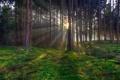 Картинка лес, деревья, закат