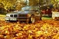 Картинка bmw, autumn, leaves, orange, stance, maple