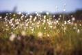 Картинка трава, макро, цветы, растения