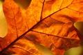 Картинка листья, осень, листки, листва, макро, листок