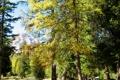 Картинка деревья, природа, парк, фото, Italy, South Tyrol